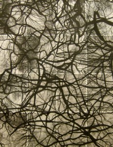 Untitled Woven Limbs, photo & marker:paper, 51 x  38 framed, 2012